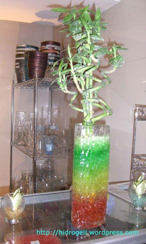 bambu emerald di ruang tengah